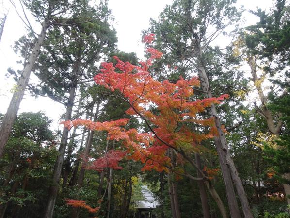 寿福寺の紅葉