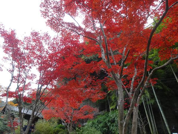 海蔵寺の紅葉2