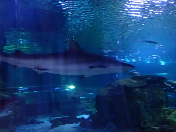 グアム 水族館
