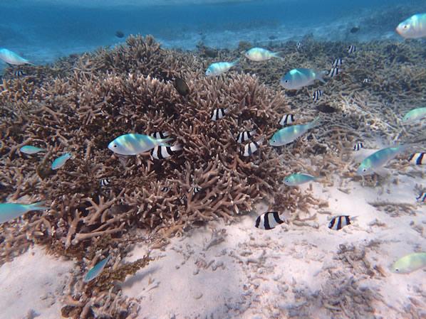 イパオビーチの魚