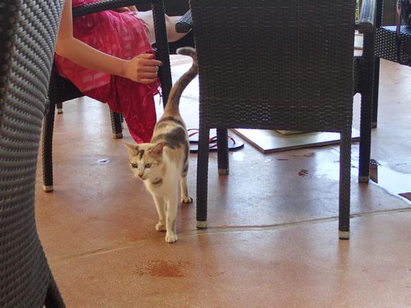 ツリーバーの猫