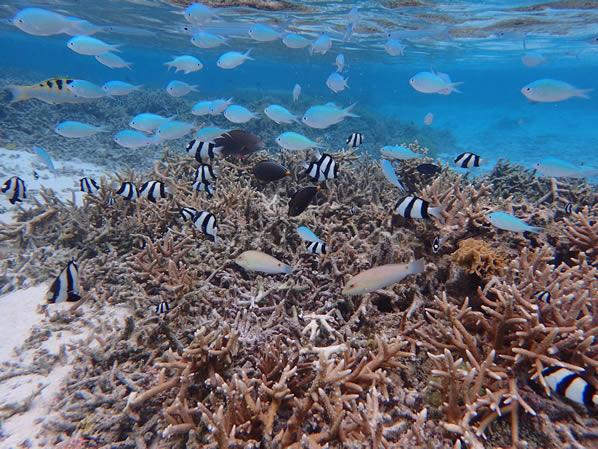 イパオビーチ魚の群れ